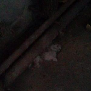 Замърсяване, обгазяване и трупове на животни в Радомир