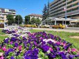 Над 24 000 цветя са посадени до момента в Перник