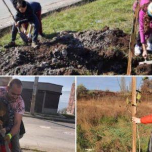 Садят 1001 дръвчета в Перник