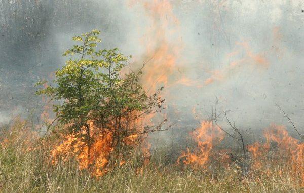 13 пожара в Перник за два дни! Преди да палите треви и храсти, вижте колко ще си платите за това…