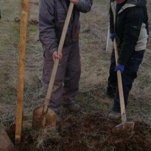 Засадиха липи в Старо село