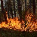 Изгоря един декар борова гора в Голо бърдо