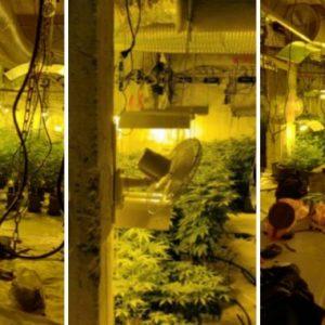 Снимки и подробности от разкритата оранжерия за марихуана в град Перник