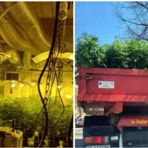Софиянци отглеждали марихуаната в Перник, хванали ги в крачка